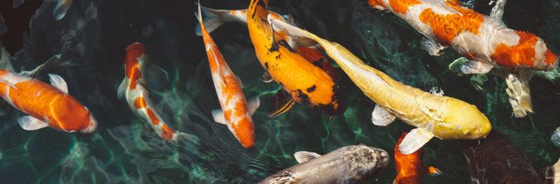 fishpondcleaner-3