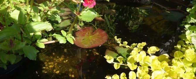 pond-green